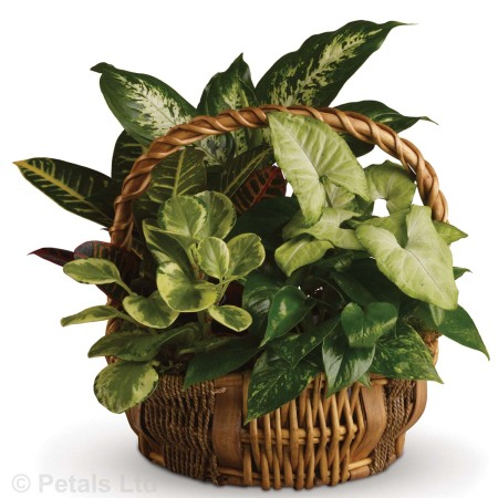 Mix plants in large basket